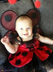 baby_ladybug